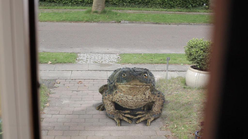 Toad_for_zulu_skud_1 (00090)